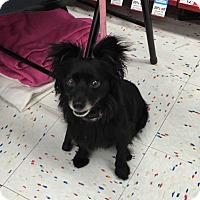Adopt A Pet :: Noir - Corona, CA