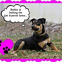 Adopt A Pet :: Barbie - Marion, KY