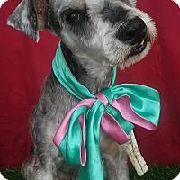 Adopt A Pet :: CHESTER - Corona, CA
