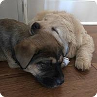 Adopt A Pet :: Meadow - Girard, GA