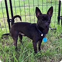 Adopt A Pet :: Lightning - Clifton, TX