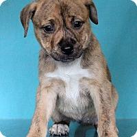 Adopt A Pet :: Teresa - Waldorf, MD