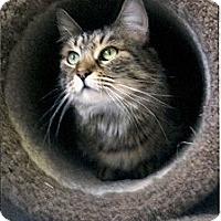 Adopt A Pet :: Cuddles - Medway, MA