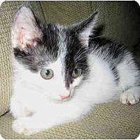 Adopt A Pet :: Timmy - Davis, CA