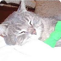 Adopt A Pet :: Freddy - Toronto, ON