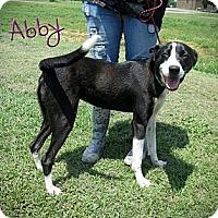 Adopt A Pet :: Abby - Poughkeepsie, NY