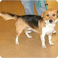 Adopt A Pet :: HarrisonPENDING - Toronto/Etobicoke/GTA, ON