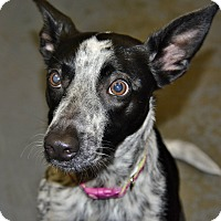 Adopt A Pet :: Paige - Meridian, ID