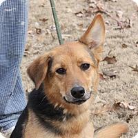 Adopt A Pet :: Addy - Marion, AR