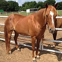 Adopt A Pet :: Murphy - Bryan, TX
