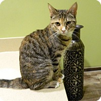 Adopt A Pet :: Cinder - The Colony, TX