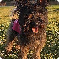Adopt A Pet :: Lulu - Newport Beach, CA