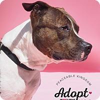 Adopt A Pet :: April - Whitehall, PA