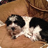 Adopt A Pet :: Matty - Staten Island, NY