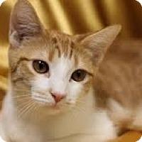 Adopt A Pet :: Ashley - Alexandria, VA