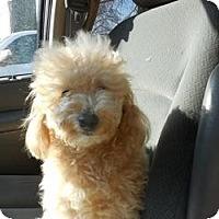 Adopt A Pet :: JJ - Shawnee Mission, KS