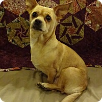 Adopt A Pet :: Pixie - North Bend, WA