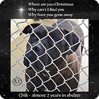 Adopt A Pet :: Chili - Sautee, GA