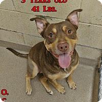 Adopt A Pet :: 1-5 Cassie - Triadelphia, WV
