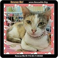 Adopt A Pet :: Willa - Beaumont, TX