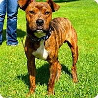 Adopt A Pet :: Harvest - East Randolph, VT