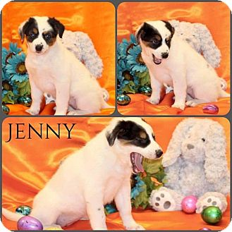 Great Pyrenees Mix Puppy for adoption in DeForest, Wisconsin - Jenny