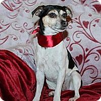 Adopt A Pet :: Zoey - Louisville, CO