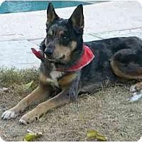 Adopt A Pet :: Bodie - Phoenix, AZ
