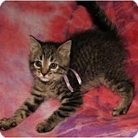 Adopt A Pet :: Polly - Norwich, NY