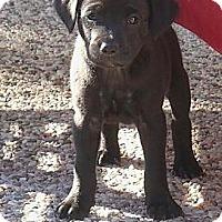 Adopt A Pet :: Kona - La Habra Heights, CA