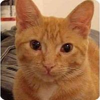 Adopt A Pet :: Mango - Los Angeles, CA