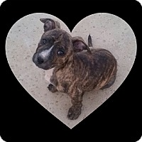 Adopt A Pet :: Green Bean - Temecula, CA
