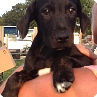 Adopt A Pet :: Brewster - Medora, IN