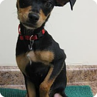 Adopt A Pet :: Minnie - Gary, IN