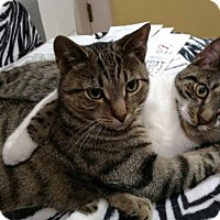 Adopt A Pet :: Murph and Ty - Philadelphia, PA