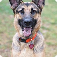Adopt A Pet :: Ramble - Wayland, MA