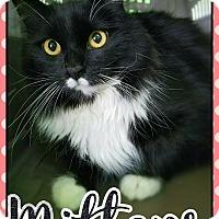 Adopt A Pet :: Mittens - Edwards AFB, CA