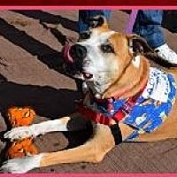 Adopt A Pet :: Sophie - Ogden, UT