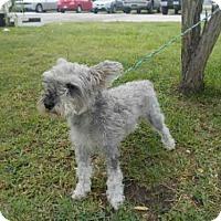 Adopt A Pet :: A010901 - Rosenberg, TX