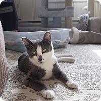 Adopt A Pet :: Hope - New  York City, NY