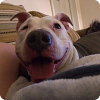 Adopt A Pet :: Luna - Monroe, CT