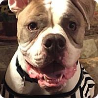 Adopt A Pet :: Zeus (COURTESY POST) - Baltimore, MD
