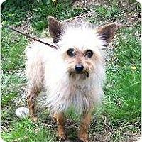 Adopt A Pet :: Branson - Seattle, WA