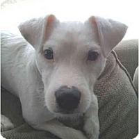 Adopt A Pet :: Jay - Rigaud, QC