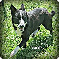 Adopt A Pet :: Fat Boy - Vancleave, MS
