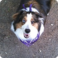Adopt A Pet :: Nina (ADOPTION PENDING) - Pittsburgh, PA