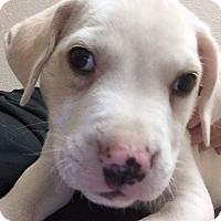 Adopt A Pet :: Baltic - Henderson, NV