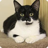 Adopt A Pet :: Beaux - Hammond, LA