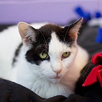 Adopt A Pet :: Luella - Grayslake, IL
