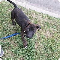 Adopt A Pet :: Lucky - LAKEWOOD, CA